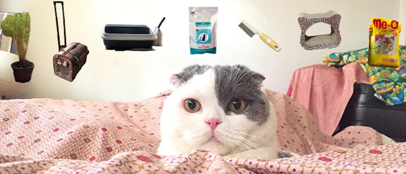 Cat Blogger แนะนำของใช้ 7 อย่างที่ขาดไม่ได้สำหรับการเลี้ยงแมว