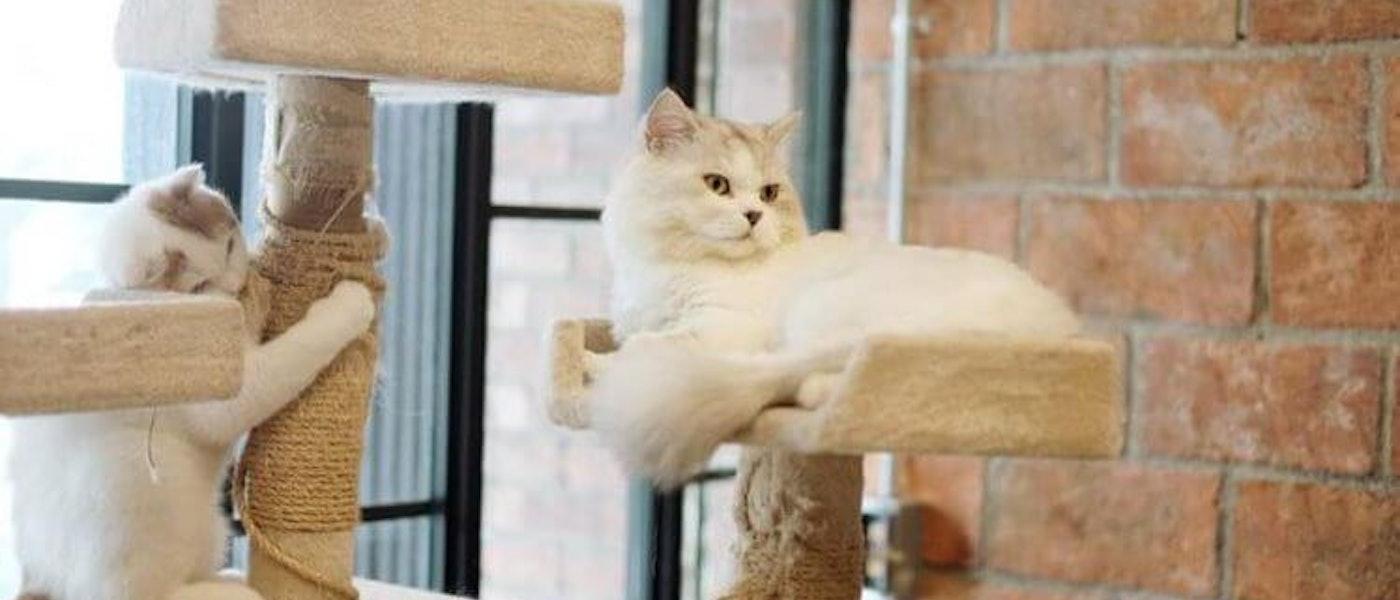 10 อันดับ ทรายแมวที่ทาสแมวตัวจริงต้องห้ามพลาด ประจำปี 2019