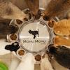 เจ้าของคาเฟ่แมวแนะนำของใช้ 10 ชิ้นที่จะทำให้น้องแมวมีความสุข