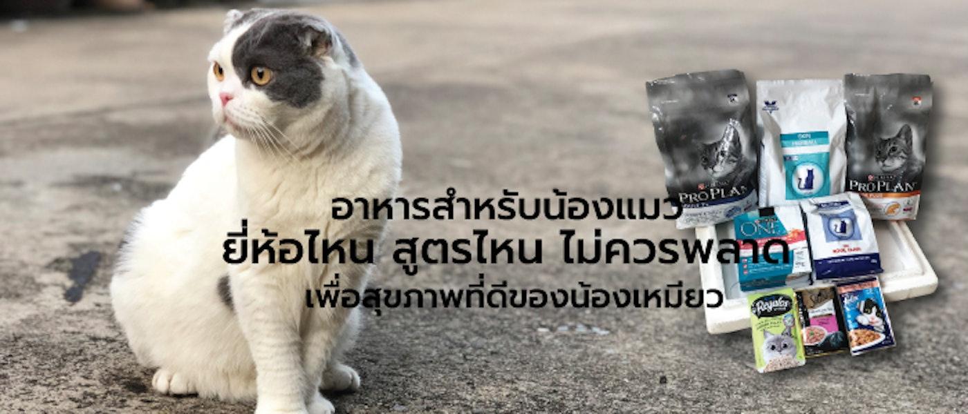 8 อันดับ อาหารสำหรับน้องแมว ยี่ห้อไหน สูตรไหนไม่ควรพลาด เพื่อสุขภาพที่ดีของน้องเหมียว