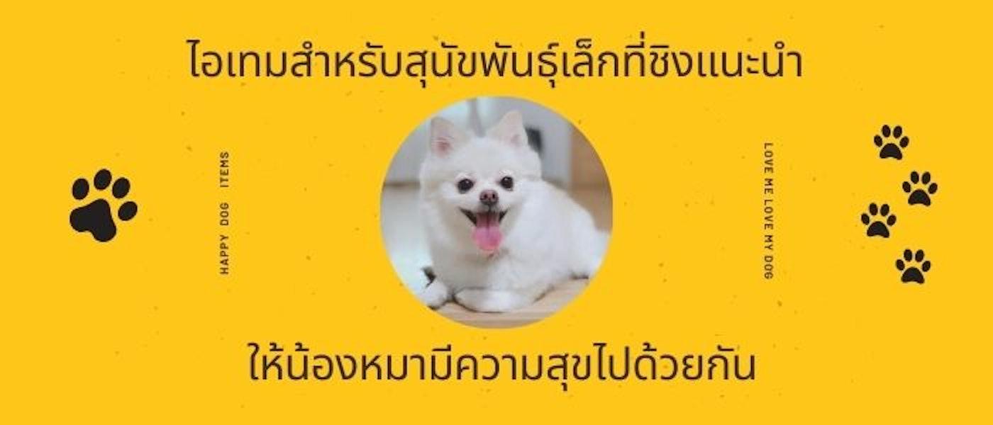 10 ไอเทมสำหรับสุนัขพันธุ์เล็กที่ชิงแนะนำ ให้น้องหมามีความสุขไปด้วยกัน