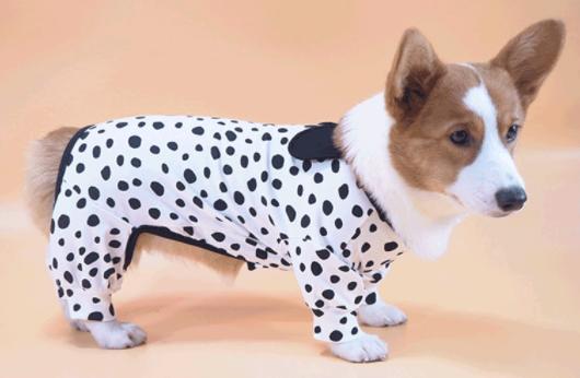 เลือกเสื้อผ้าสุนัขที่สวมถอดได้ง่าย เนื้อผ้าคุณภาพดี