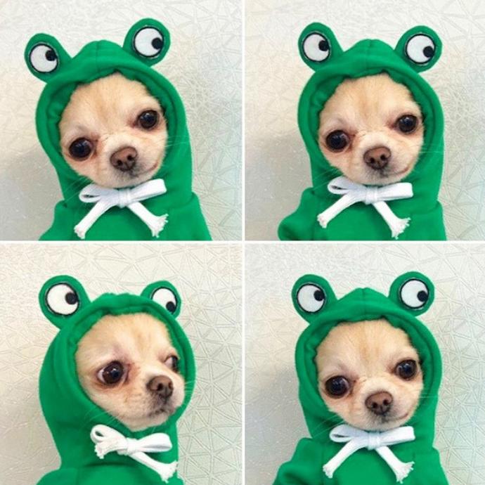 เสื้อสุนัขแฟชั่น