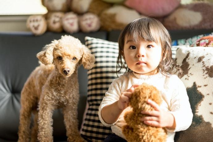 กล้องที่มี EOS Scene Analysis : เหมาะกับการถ่ายภาพเด็กและสัตว์เลี้ยง