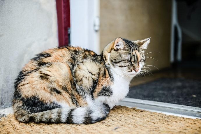 อาหารแมววิสกัส สูตรแมวโต 7 ปีขึ้นไป