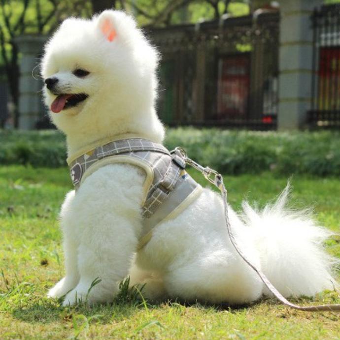 เสื้อสุนัขระบายอากาศ