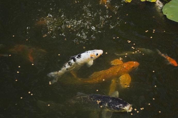 ปลาควรทานอาหารหมดภายใน 15 นาที
