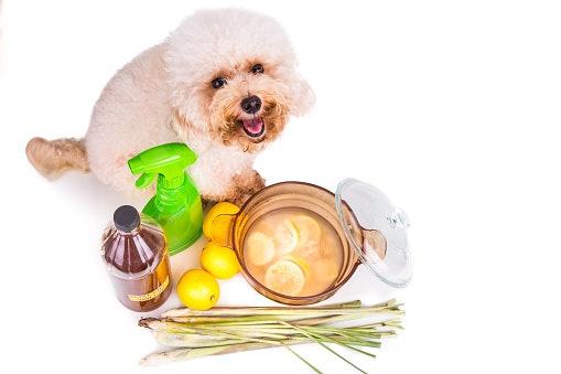 เลือกสเปรย์บำรุงขนสุนัขที่ปลอดสารเคมีอันตราย