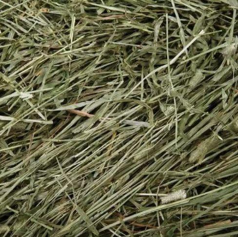 ประเภทหญ้าทิมโมธี (Timothy Hay)