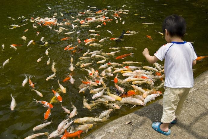 ควรให้อาหารปลาคาร์พในจุดเดิมทุกวัน
