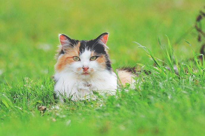 อาหารแมววิสกัส สูตรแมวโต 1 ปีขึ้นไป