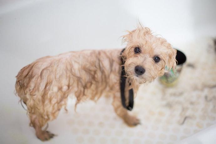 กรดซัลโฟซัคนิเนต : เพิ่มความสดชื่นให้สุนัขผิวมัน