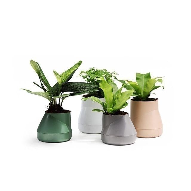 Qualy กระถางต้นไม้ Hill Pot – Self-watering Plant Pot 1