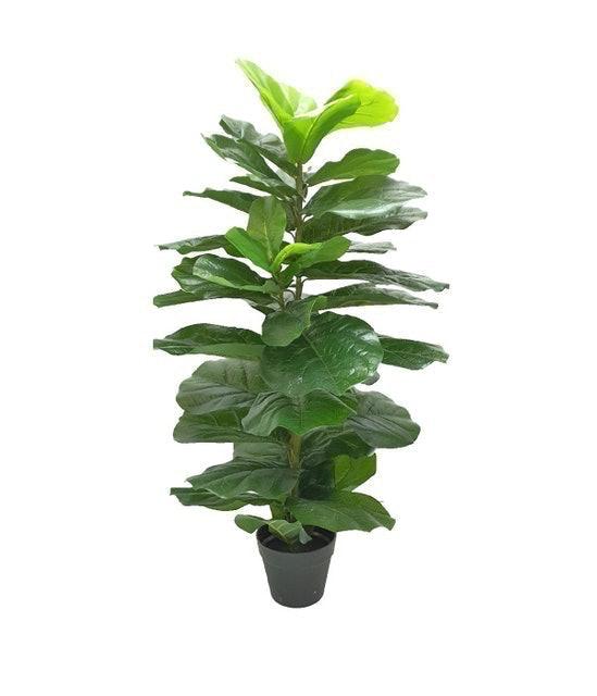 Ramitrees ต้นไทรใบสักปลอม มินิมอล 1