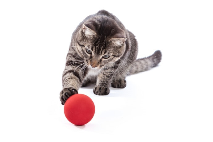 ของเล่นที่สีสดใสที่ดึงดูดสายตาของแมว