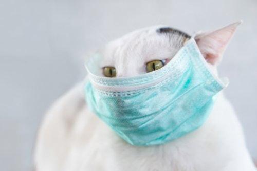 เลือกผลิตภัณฑ์ที่ช่วยระงับกลิ่นและขจัดแบคทีเรีย