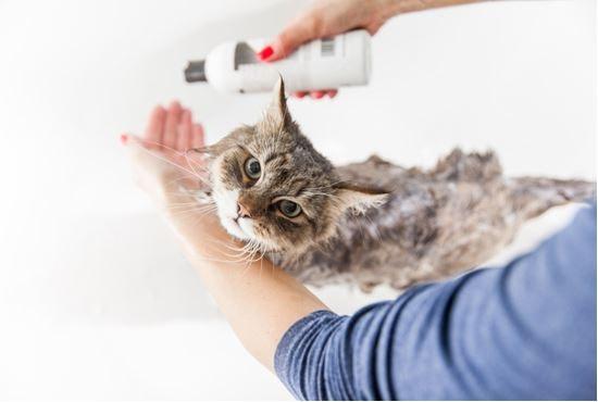 แชมพูขจัดความมันส่วนเกินสำหรับแมวผิวมัน