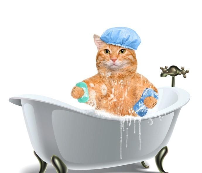 เพราะเหตุใดแมวจึงต้องการแชมพู ?