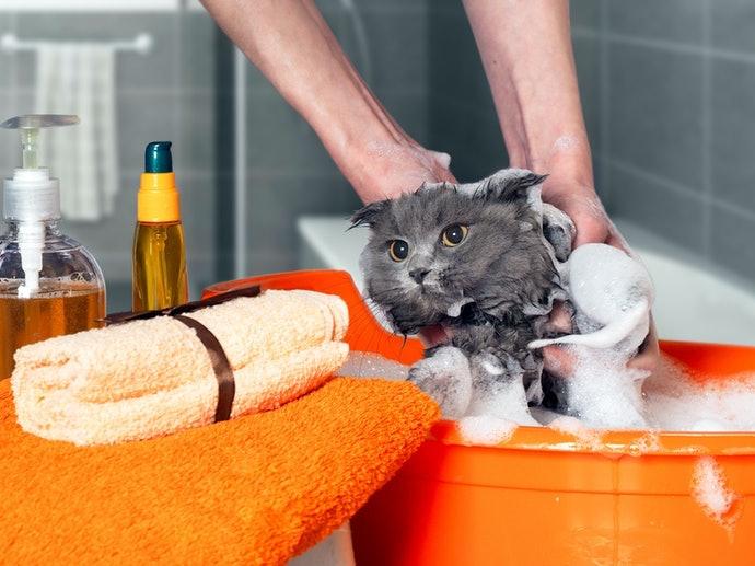 แชมพูธรรมดาที่ต้องใช้น้ำล้างออก