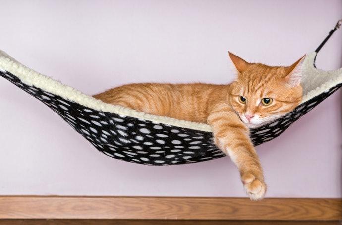 เสน่ห์ของเปลแมวคืออะไร ?