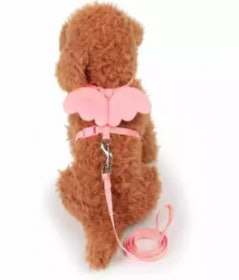 10 อันดับ ปลอกคอสำหรับสุนัขพันธุ์ชิวาวา ยี่ห้อไหนดี ฉบับล่าสุดปี 2019 5