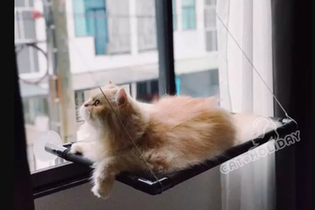1. CatHoliday – ที่นอนแมวติดกระจก 1